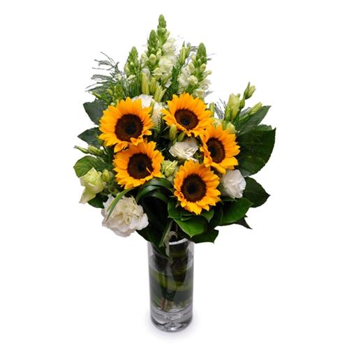向日葵鲜花养护常识图片